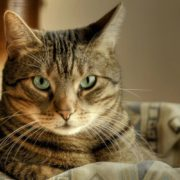 ДОМА-КОТ 2-180x180 Как подстричь кошке когти?