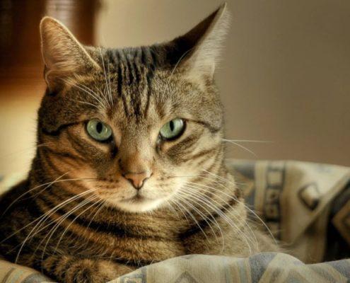 ДОМА-КОТ 2-495x400 Метки – это своего рода «визитная карточка» кота!