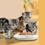 ДОМА-КОТ 3-1-180x180 Как приучить котенка к сухому корму если он его не ест?
