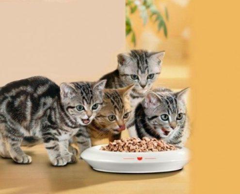 ДОМА-КОТ 3-1-495x400 Метки – это своего рода «визитная карточка» кота!