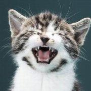 ДОМА-КОТ 3-180x180 Почему котенок мяукает?