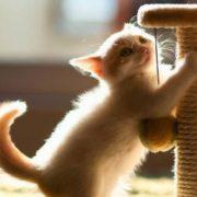 ДОМА-КОТ 3-2-180x180 Как приучить котенка точить когти об когтеточку?