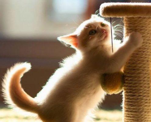 ДОМА-КОТ 3-2-495x400 Метки – это своего рода «визитная карточка» кота!