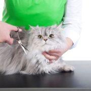ДОМА-КОТ 3-4-180x180 Как подстричь кошку в домашних условиях?