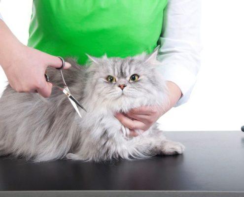ДОМА-КОТ 3-4-495x400 Метки – это своего рода «визитная карточка» кота!