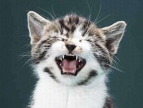 ДОМА-КОТ 3-495x375 Метки – это своего рода «визитная карточка» кота!