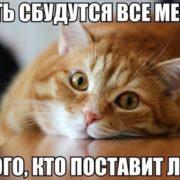 ДОМА-КОТ 3-5-180x180 И правда!