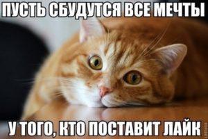 ДОМА-КОТ 3-5-300x200 3