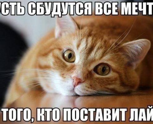 ДОМА-КОТ 3-5-495x400 Метки – это своего рода «визитная карточка» кота!