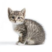 ДОМА-КОТ Kvadrat01-180x180 Метки – это своего рода «визитная карточка» кота!