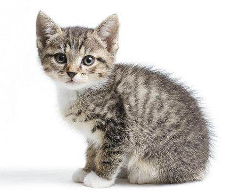 ДОМА-КОТ Kvadrat01-495x400 Метки – это своего рода «визитная карточка» кота!