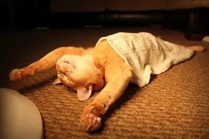 ДОМА-КОТ 1 Для чего кошки ложатся спать с хозяевами?
